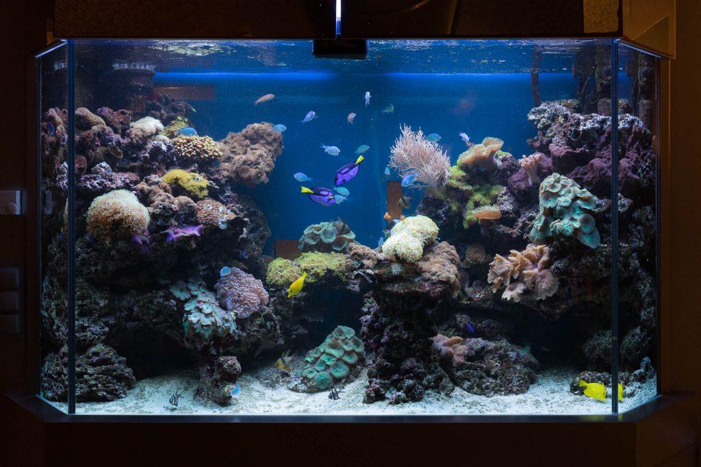 Wir biten ein Aquarium Monatsservice an, damit SIe noch mehr Freude mit Ihrem Becken haben.