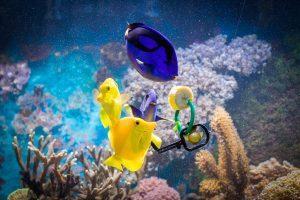 Füttern im Meerwasseraquarium: Banane hilft gegen Krankheiten.