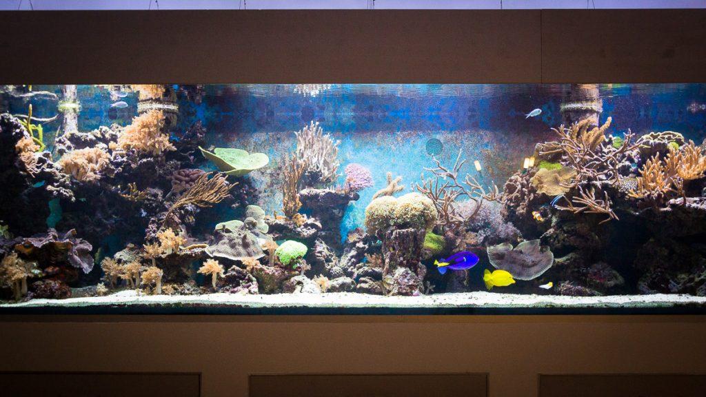 Das Aquarium Vollservice und das Aquarium Urlaubsservice machen es möglich, dass Sie Ihr Aquarium von Experten betreuen lassen.