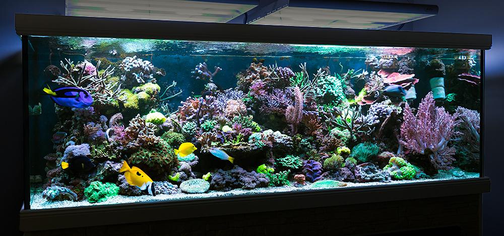 Unser Meerwasseraquarium zuhause