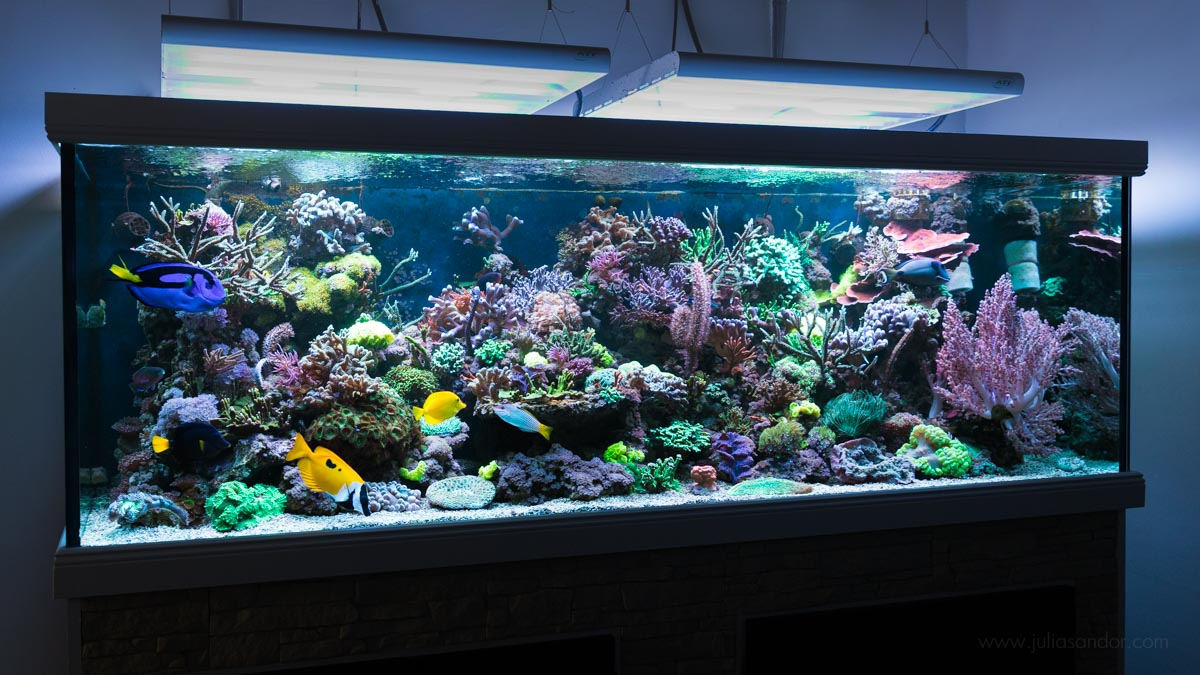 meerwasseraquarium zuhause korallenriff center. Black Bedroom Furniture Sets. Home Design Ideas