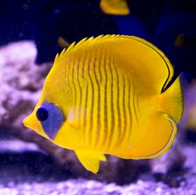 Korallenriff Center - Wassertemperatur reduzieren im Sommer
