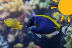 Wie können Sie die Temperatur Ihres Aquariums im Sommer optimal halten?